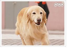 ディロン 運命の犬ふたたび : 龍...
