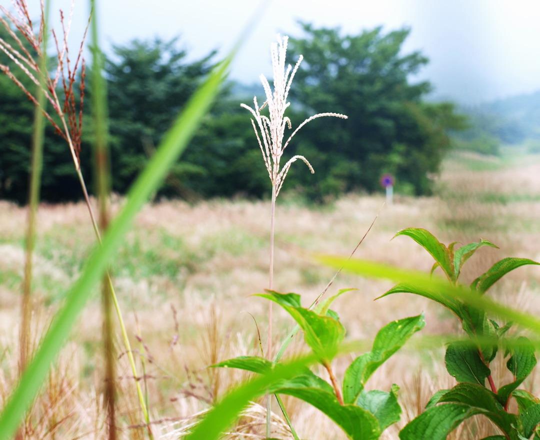 富士撮影ツアー_f0079943_15343811.jpg