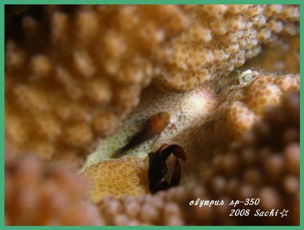 f0179961_137521.jpg