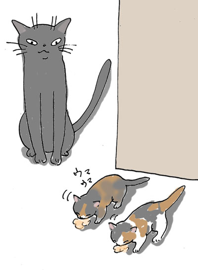 黒猫のおにいちゃんと麦太とトリュフとお知らせ_a0064067_118388.jpg