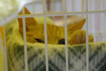 黒猫のおにいちゃんと麦太とトリュフとお知らせ_a0064067_149387.jpg