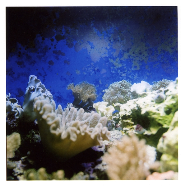 サンゴの水槽_d0081890_1747154.jpg