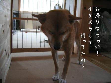 f0068501_1512137.jpg