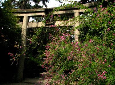 梨の木神社と常林寺_e0048413_20414663.jpg