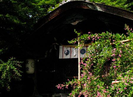 梨の木神社と常林寺_e0048413_20425525.jpg