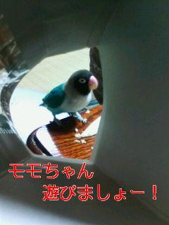 f0126418_16303919.jpg