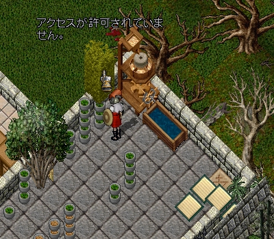 パブ55  新しい植物_e0089320_18255215.jpg