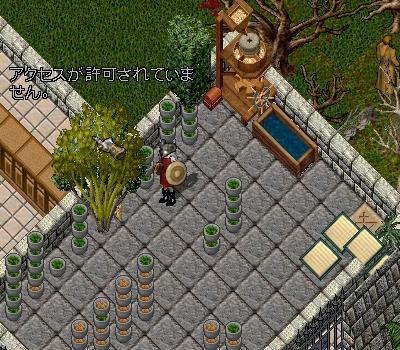 パブ55  新しい植物_e0089320_1827429.jpg