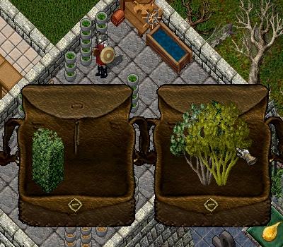 パブ55  新しい植物_e0089320_18275524.jpg