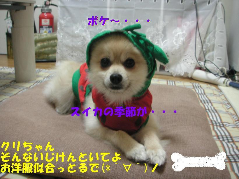 c0179136_1612556.jpg