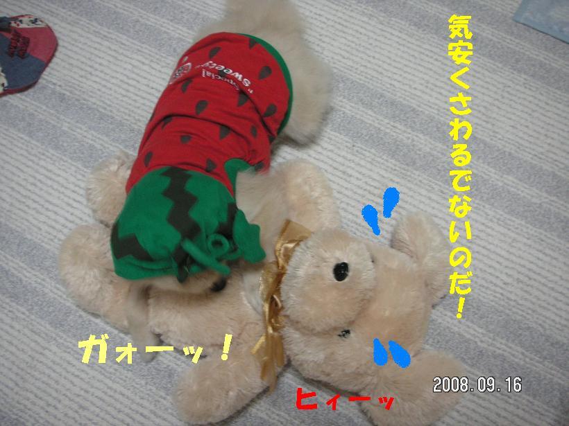 c0179136_1625960.jpg