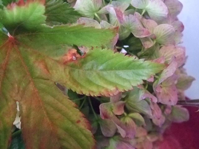 オークリーフ(ニュアンスカラーの花束)_f0049672_12571225.jpg