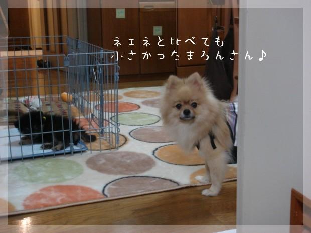 b0078073_1316533.jpg
