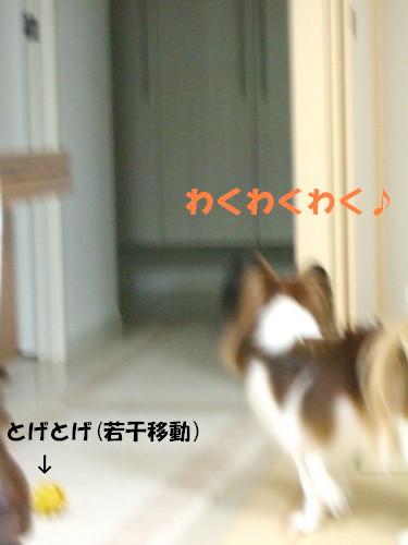 c0044199_1121983.jpg