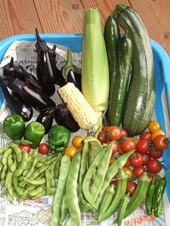 フィリピンでも安全な野菜を食べたい!作りたい!_b0128901_10185212.jpg