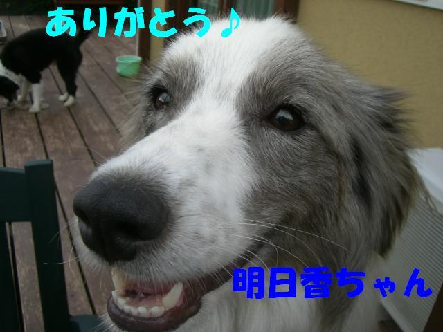 b0137913_1252055.jpg