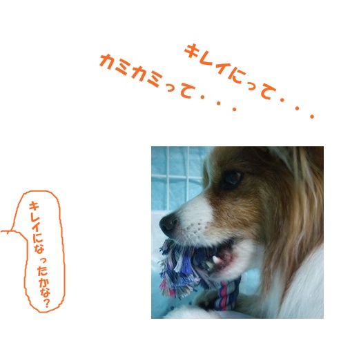 c0050220_11243153.jpg