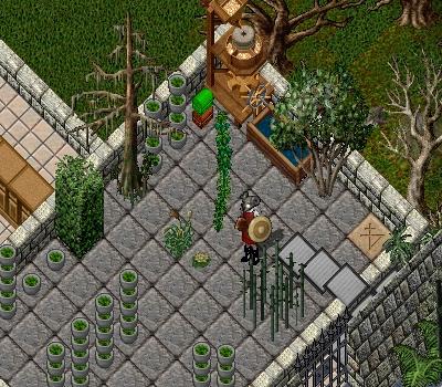 新しい植物 その2_e0089320_10393338.jpg