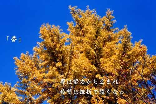 夢_b0044724_22512467.jpg