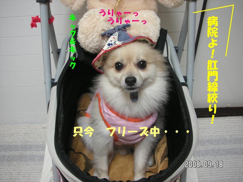 c0179136_18604.jpg