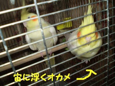 f0172650_056146.jpg