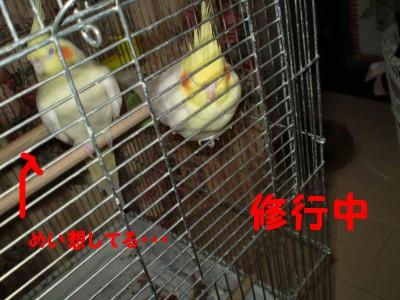 f0172650_1104497.jpg