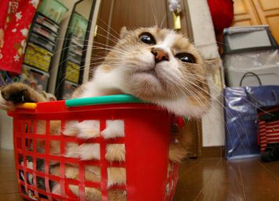 籠猫プーちゃん。_a0028451_12573781.jpg