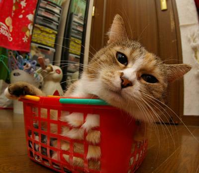 籠猫プーちゃん。_a0028451_12574571.jpg