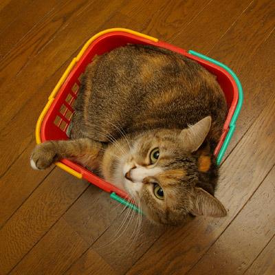 籠猫プーちゃん。_a0028451_12575324.jpg