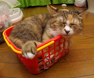 籠猫プーちゃん。_a0028451_1258032.jpg