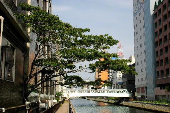 城フェスタ関連_b0093754_0104314.jpg