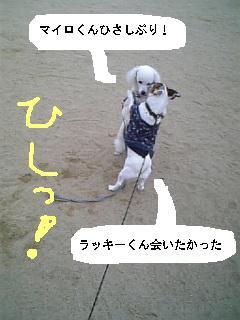 f0118066_16355242.jpg