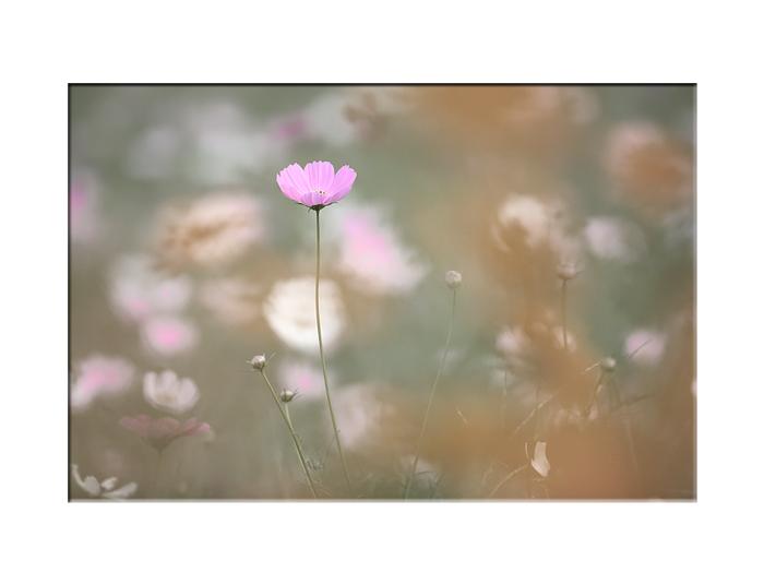 秋の花…カラクロ編_e0139093_2236882.jpg