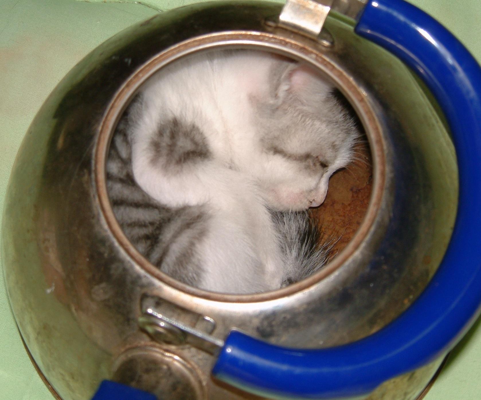 ねこ鍋バリエーション : ねこ ...