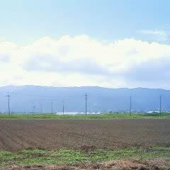 岐阜県海津市で「ちこり」の種まき_d0063218_1953253.jpg
