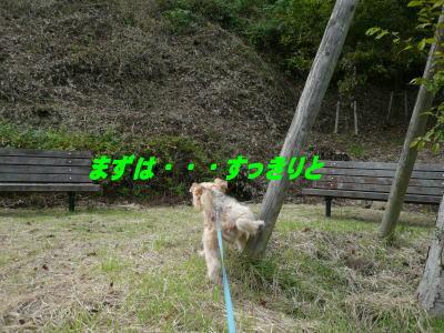 d0013645_11483077.jpg