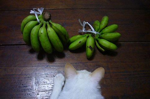 bananas._c0153966_22405748.jpg