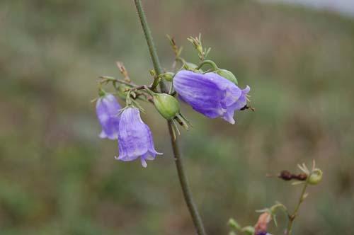 恒例の秋の『植物観察会』開催。_c0117574_1619517.jpg