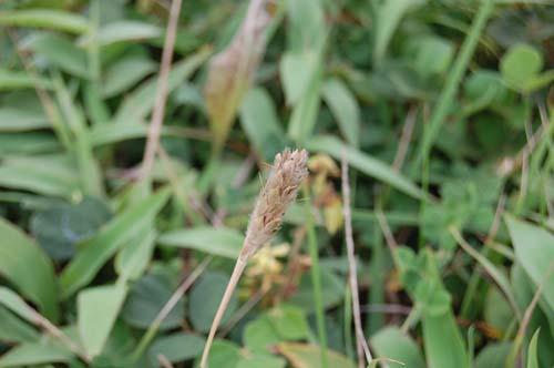 恒例の秋の『植物観察会』開催。_c0117574_16213798.jpg