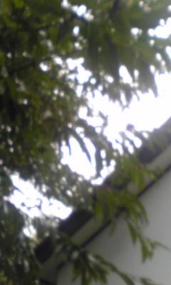 b0003483_19111867.jpg