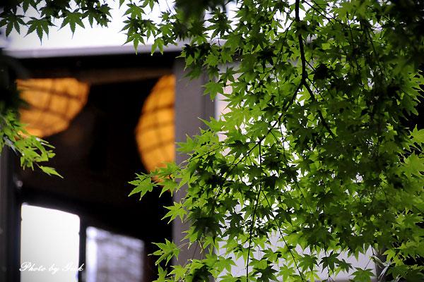 七福街道 マイナスイオンをあびに - その8 観音茶屋 夢家 ~★_d0147591_2131837.jpg