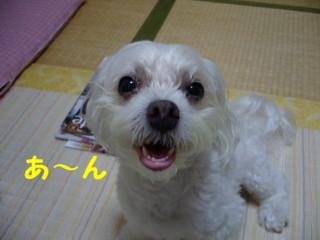 f0145192_15484381.jpg