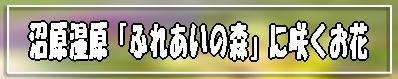 f0164592_840963.jpg