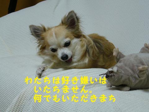 b0138430_2010051.jpg