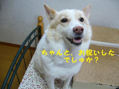 b0138430_2012254.jpg