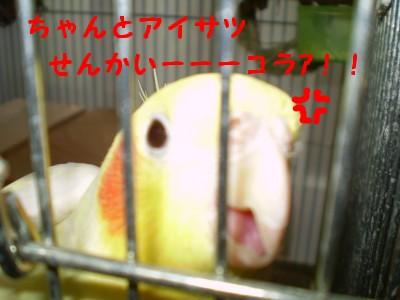 f0172650_134872.jpg