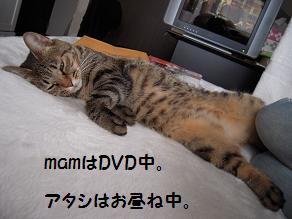 c0139488_1122356.jpg