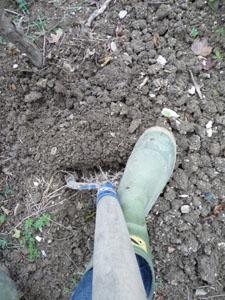 二十日大根の種を蒔きました_f0106597_21112614.jpg