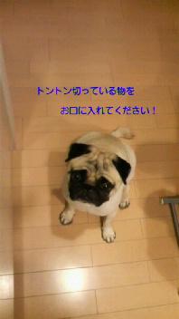 f0175397_0353283.jpg