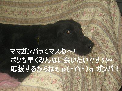 f0176499_13281899.jpg